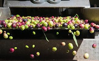 Markets-Food-Beverage-Olives-production-325x200px