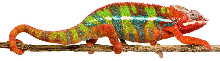 JAI-Chameleon-775-pixel-wide
