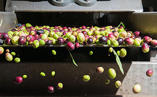 Markets-Food-Beverage-Olives-production-325x200px